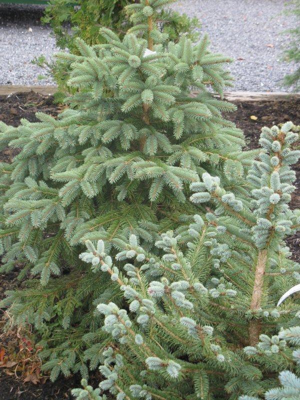 Plantes couvre sol croissance rapide 1337 montreuil d coration for Comarbuste couvre sol croissance rapide